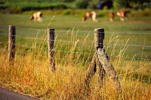 Advantages of Installing A Barbed Wire Fence-Texas Fence and Iron